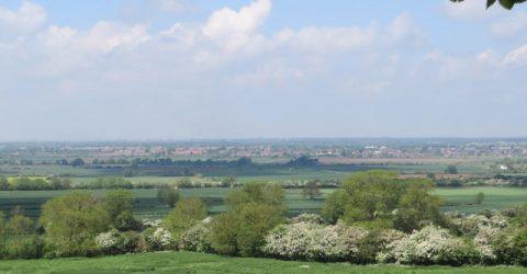 Waddington Landscape